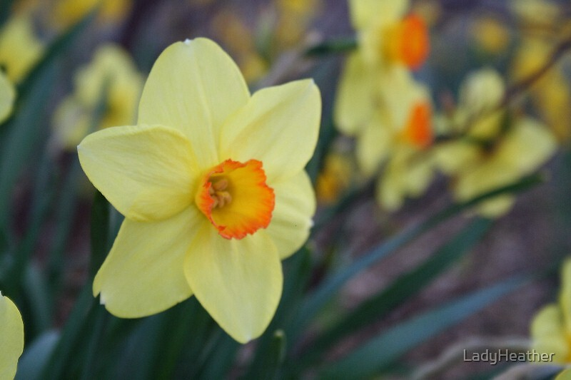 Yellow by LadyHeather