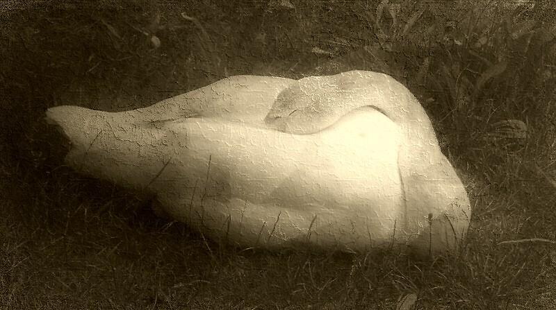 Sleep Softly by mmrich