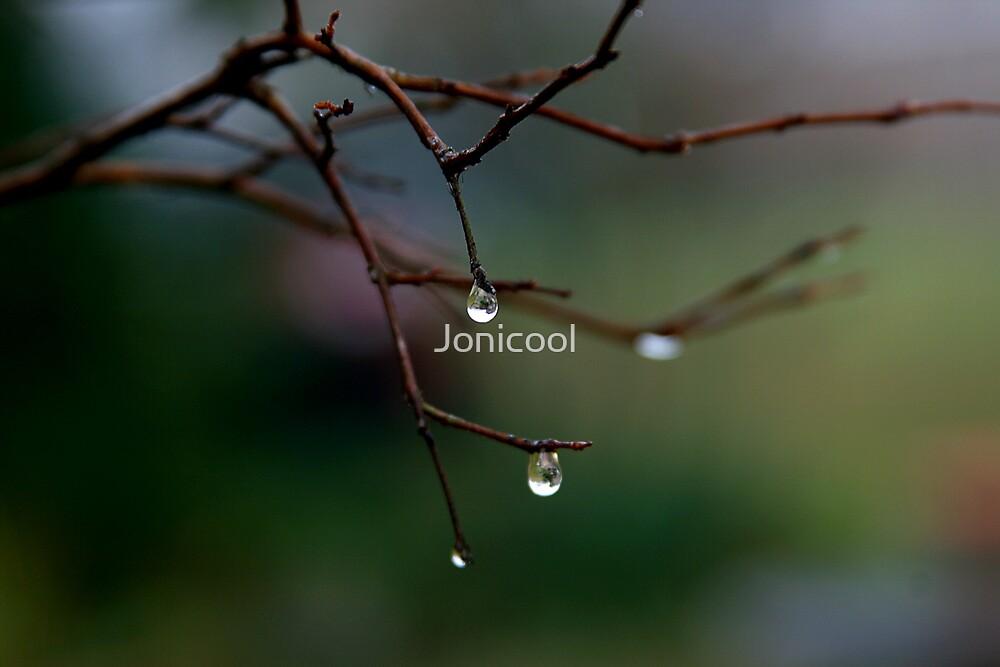 Dew Drops by Jonicool