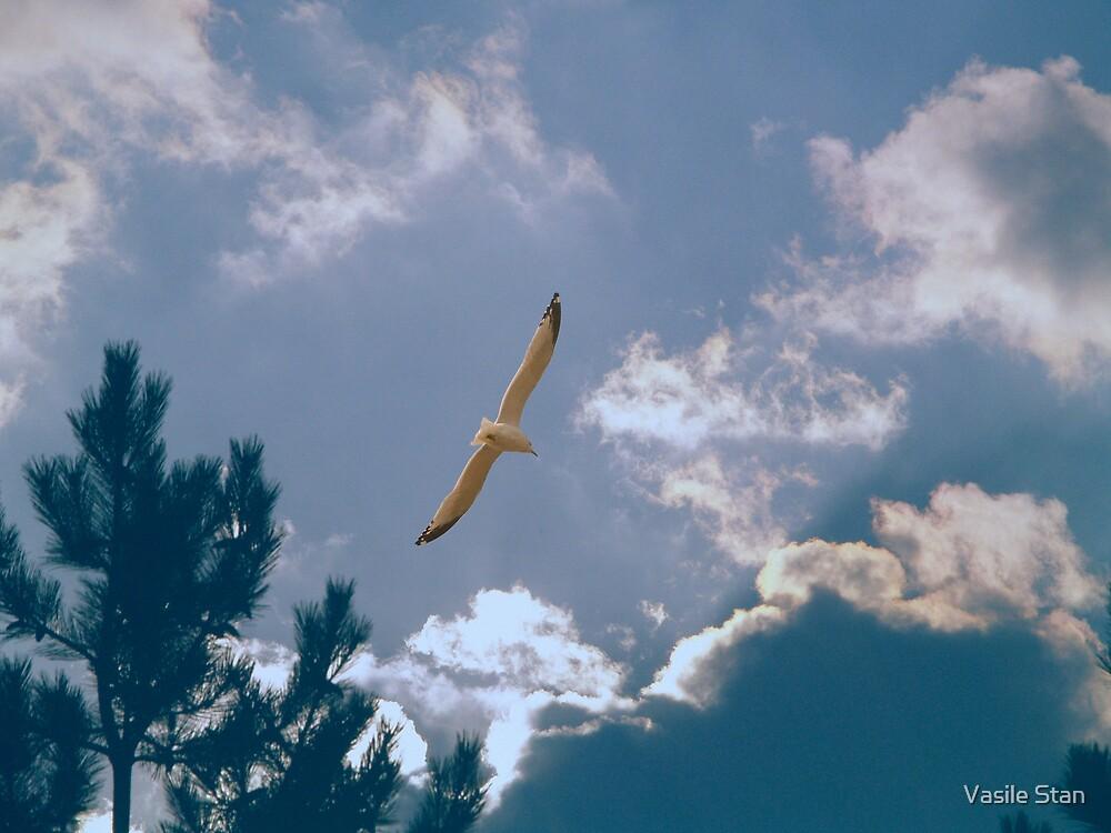 Gliding  by Vasile Stan