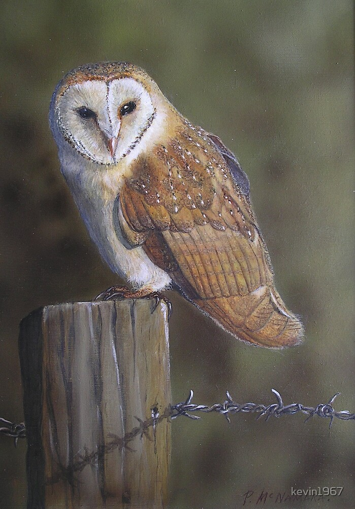 barn owl by kevin1967