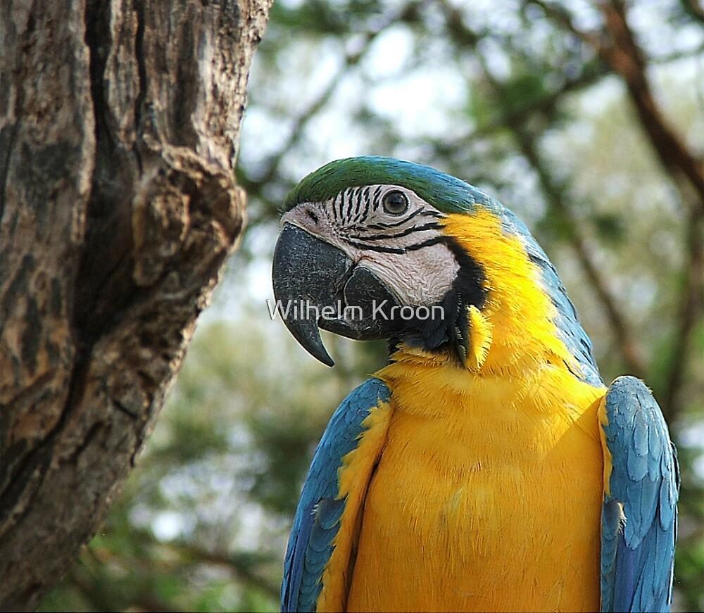 Macaw by Wilhelm Kroon