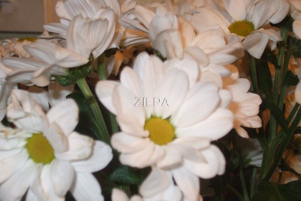 DAISY DAYS by ZILPA