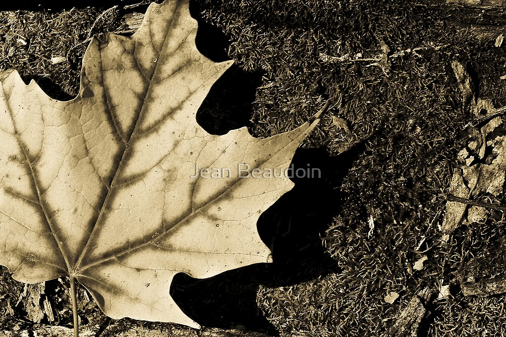 Leaf by Jean Beaudoin