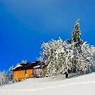 Wintertime, and the livin' ain't easy  by Kurt  Tutschek