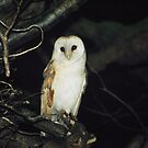 Barn Owl by Rebecca Smith