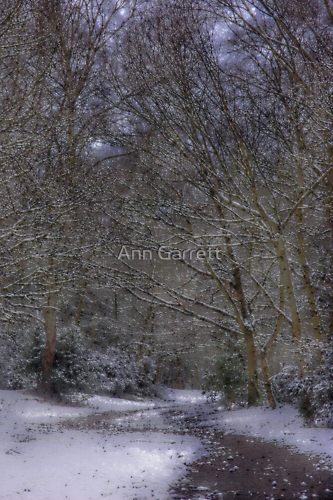 Snowy Path by Ann Garrett