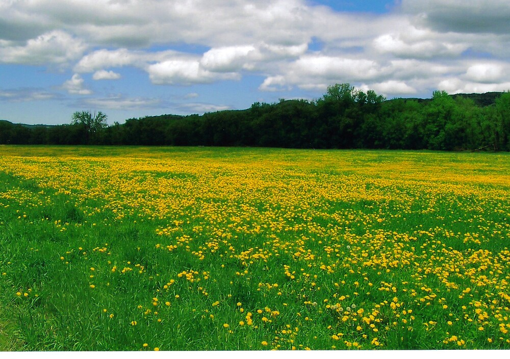 Dandelion fields forever  by Nicole Chambers