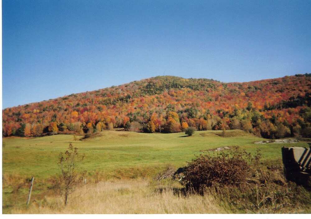 Vermont Foliage by Nicole Chambers