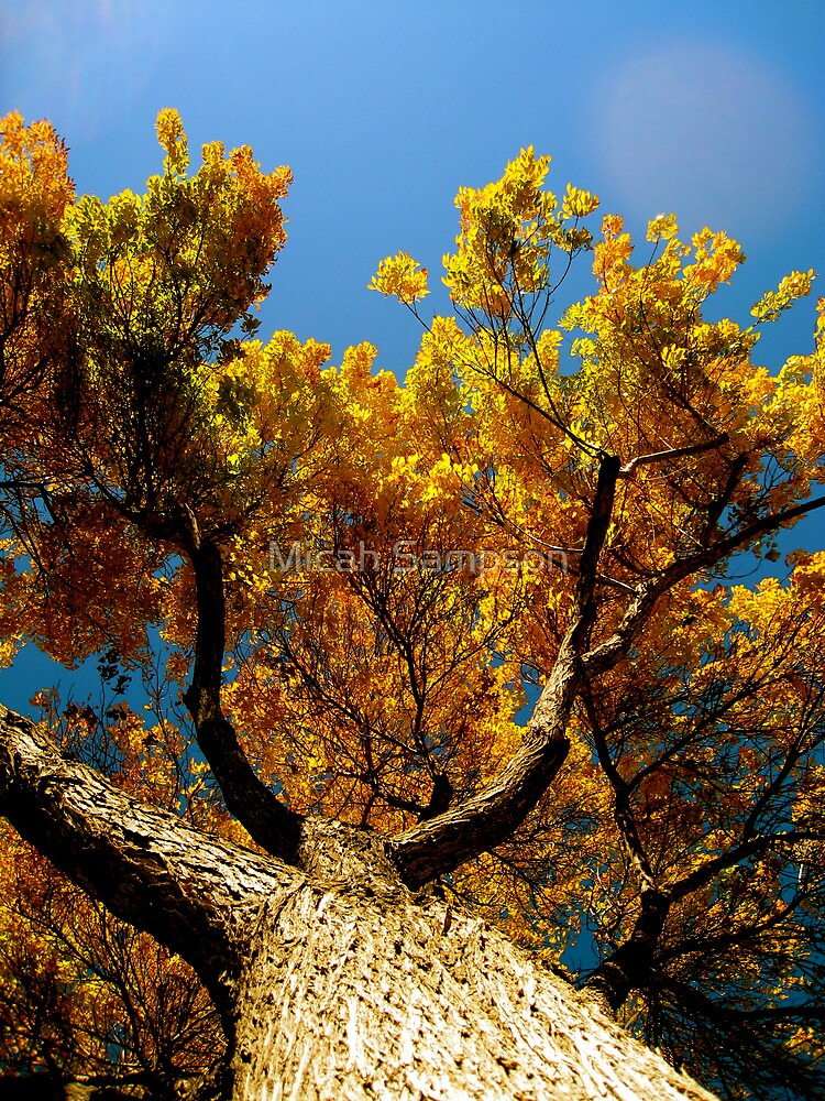 Yellow Tree by Micah Sampson
