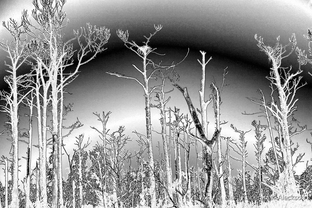 Salt Damaged Pine Trees by Mary Kaderabek-Aleckson