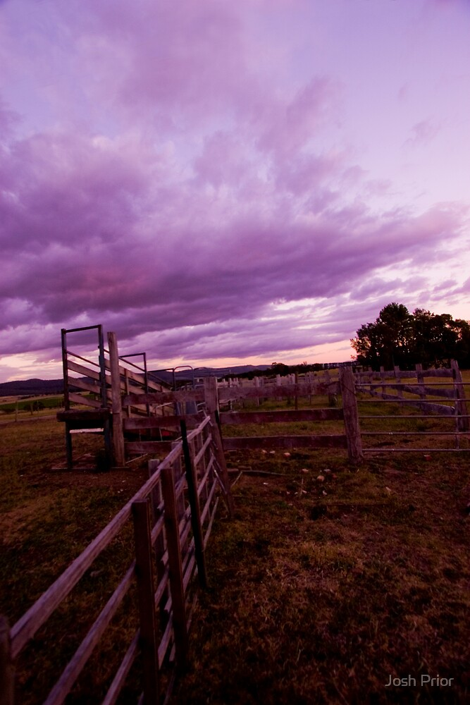Purple Haze by Josh Prior