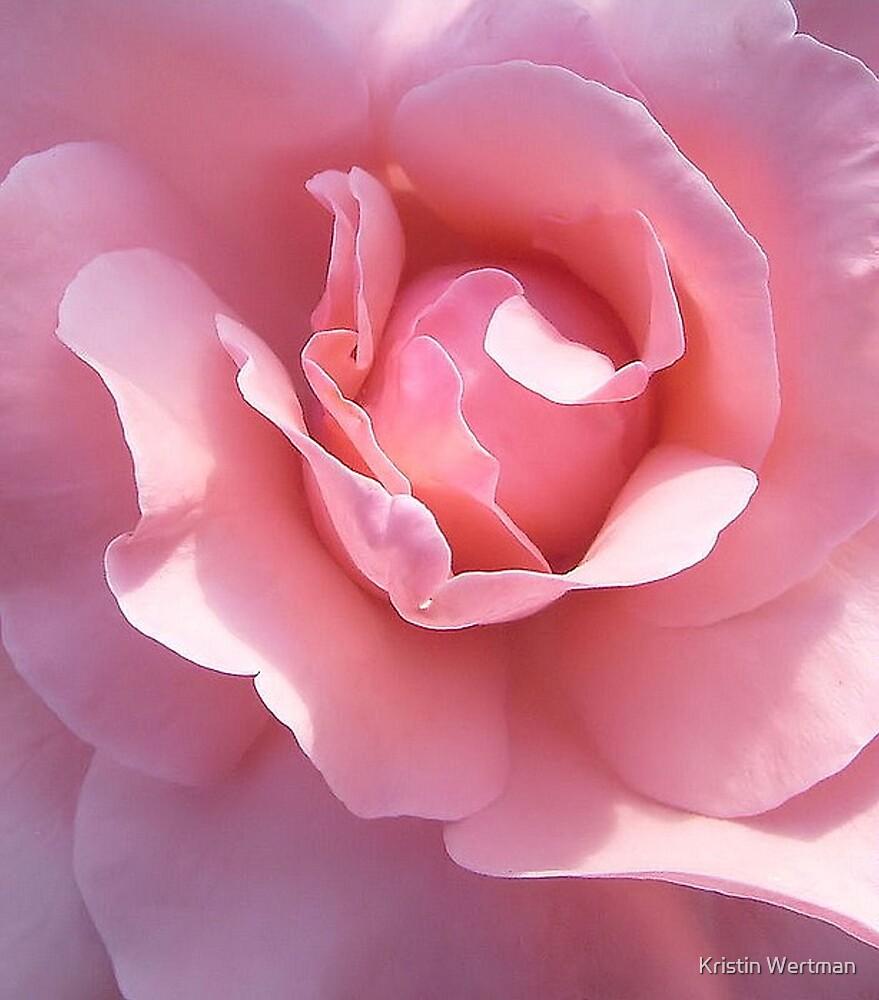 Closeup Rose by Kristin Wertman