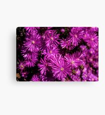 Asters 02 Image By Rich AMeN Gill Canvas Print