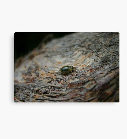Translucent Beetle Canvas Print