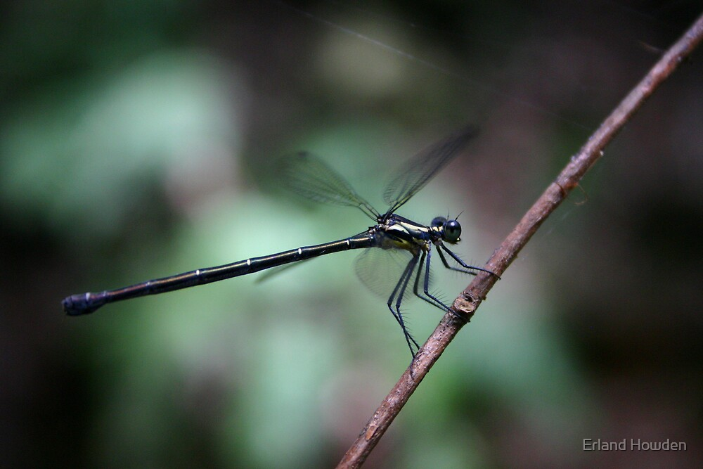 Dragonfly by Erland Howden