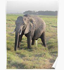 Peeing elephant Poster