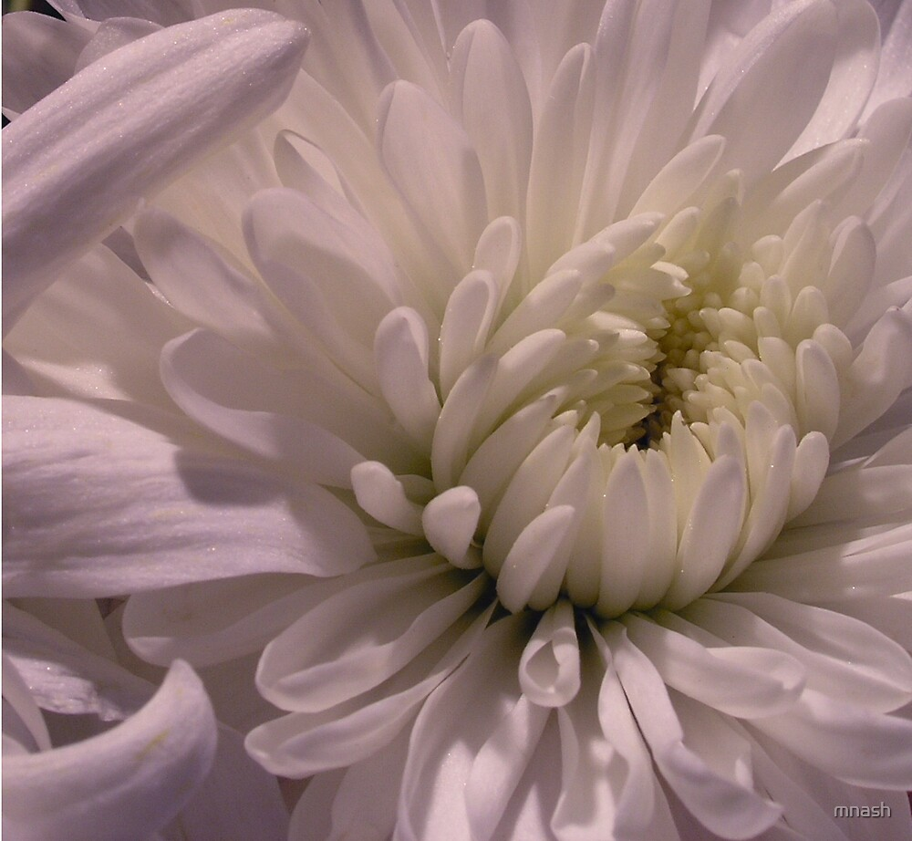 White flower by mnash