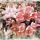 Sakura style  by Fiery-Fire