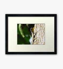 Draco palawanensis - Palawan Flying Lizard Framed Print