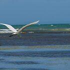 Seabird Flying Over Caribbean Ocean Beach by NydiaSRobles