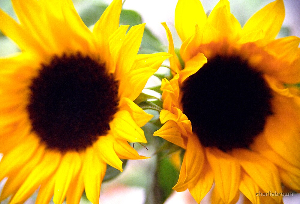 Sunshine by charliebrown