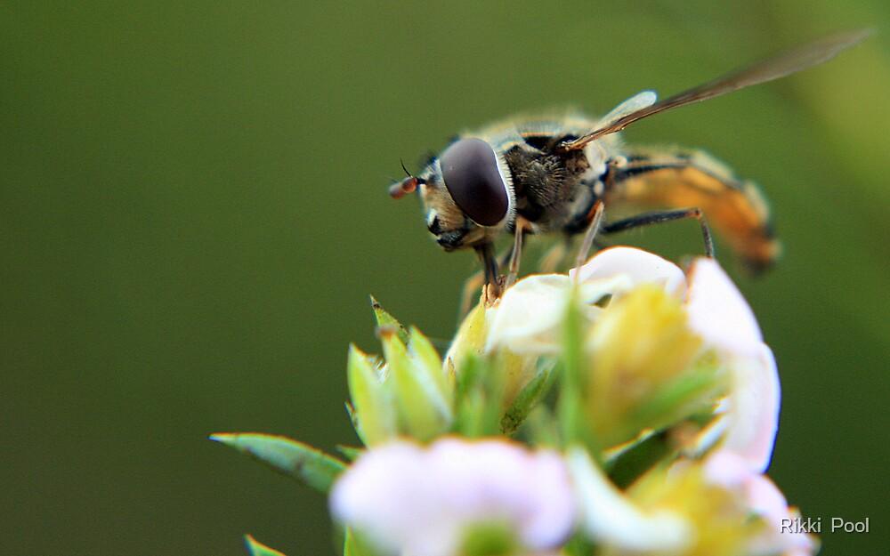 Mega Wasp. by Rikki  Pool