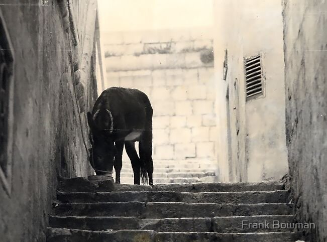 Donkey In Alley by Frank Bowman