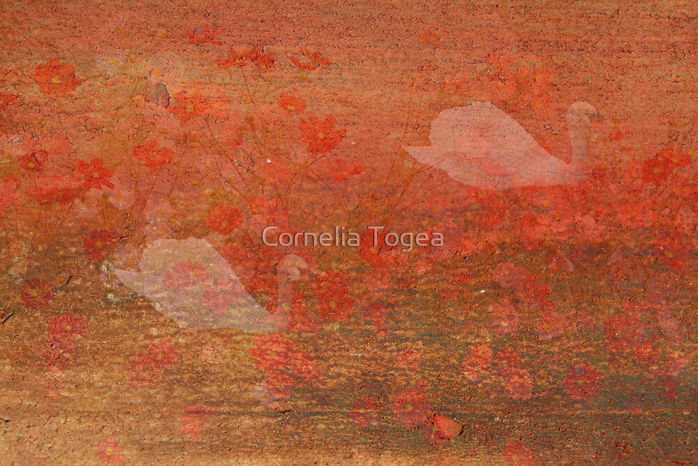 wish: age gracefully by Cornelia Togea