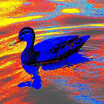 Duck - Dandenong Valley Metropolitan Park 2.jpg by PaulK
