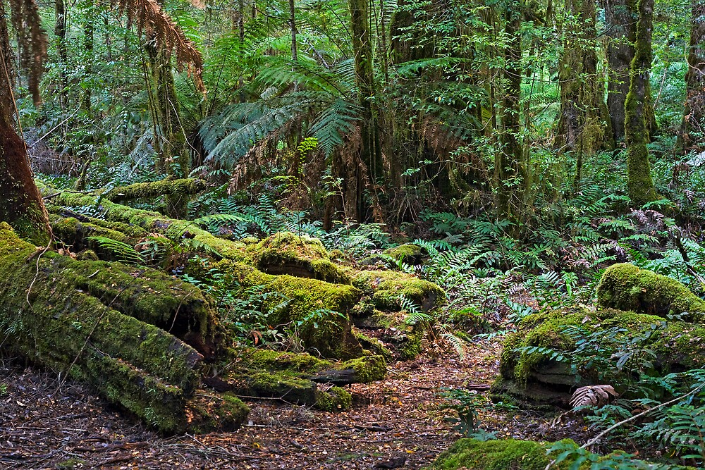 Fallen trees by Andrew Klym