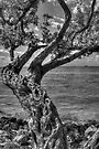 Gnarled Old Tree by Bill Wetmore