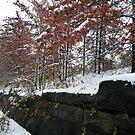January Sixth Street Embankment in Snow, Abandoned Pennsylvania Railroad Embankment, Jersey City, New Jersey by lenspiro
