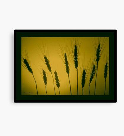 GOLDEN WHEAT  Canvas Print