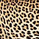 Lodge décor - Cheetah print by Maree Clarkson