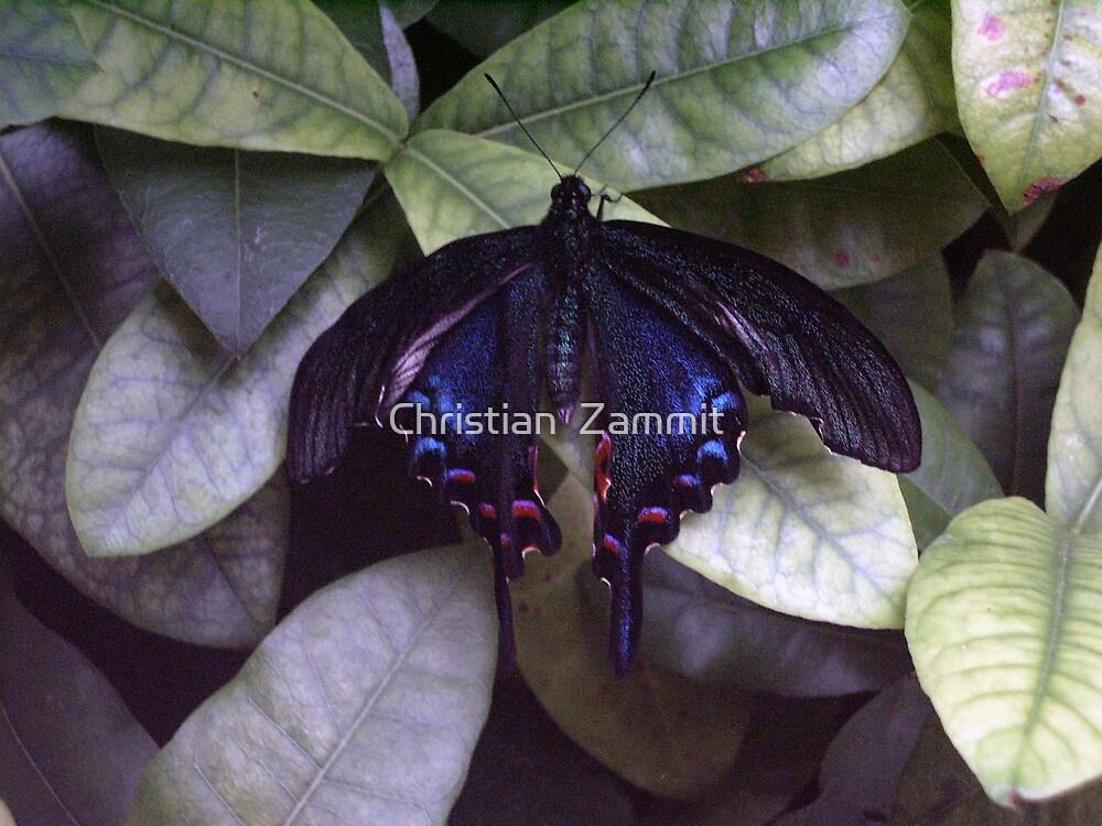 Butterfly by Christian  Zammit