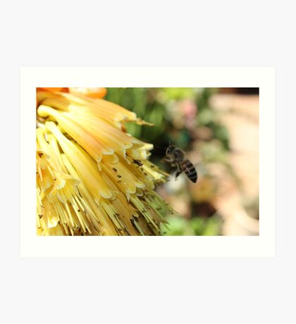 The Plight of our Honey Bees Art Print