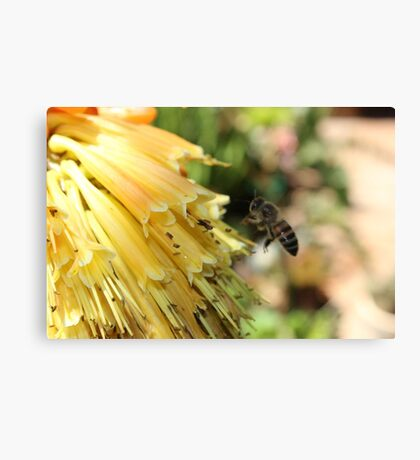 The Plight of our Honey Bees Canvas Print