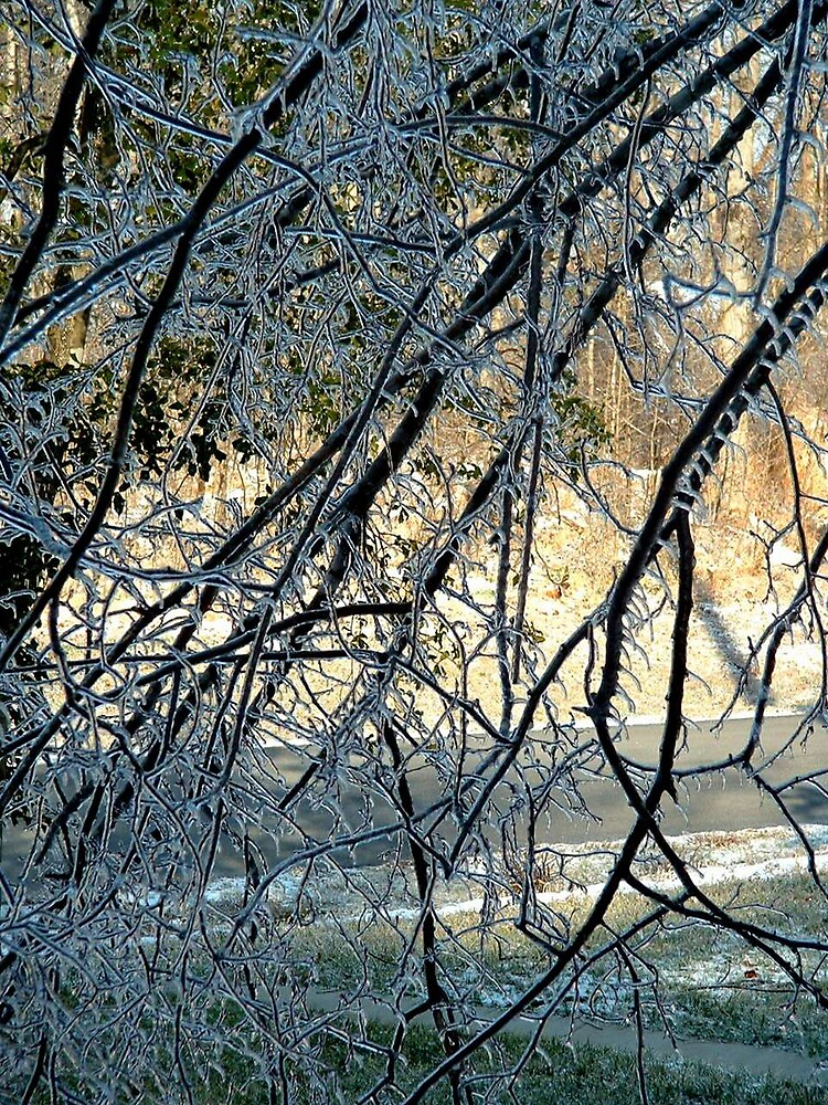 Icy Branches by Shadowfax