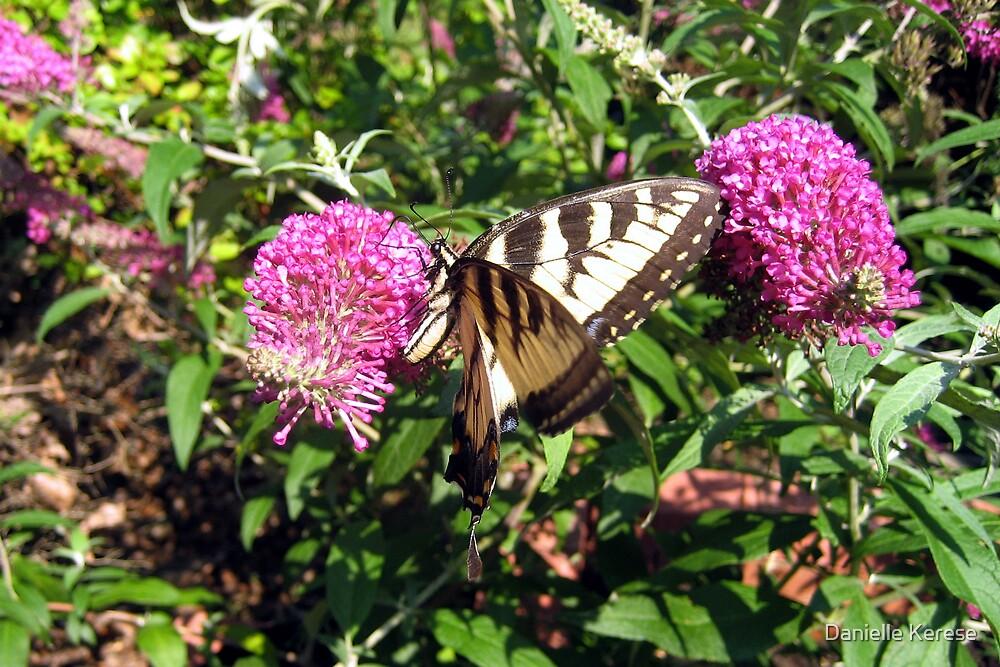 Tiger Swallowtail on Butterfly Bush by Danielle Kerese