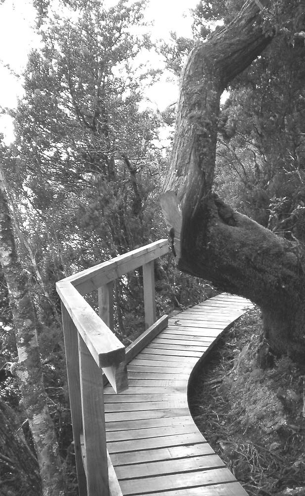 boardwalk around Dove Lake, Cradle Mt, Tasmania by gaylene