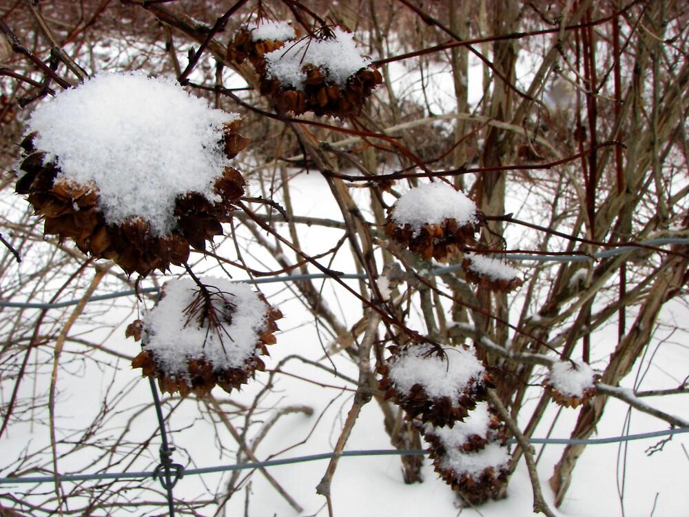 Winter Bells pt.II by ashleymaiwoo