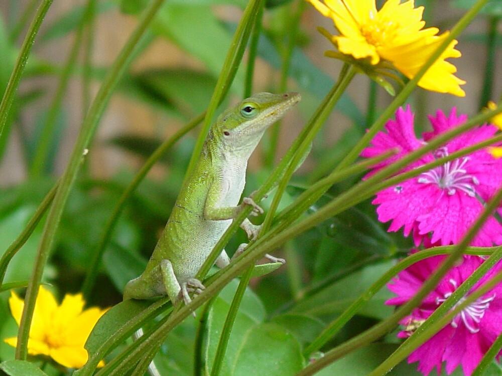 Lizard Model by mandytx07