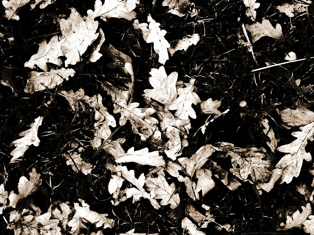 Autunm Leaves in Black and White by Charlotte-Emily Edgell