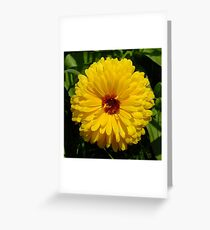 Holligold Blossoming Yellow Pot Marigold Flower Greeting Card