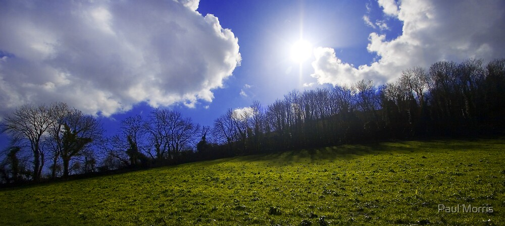 Sun through Trees by Paul Morris