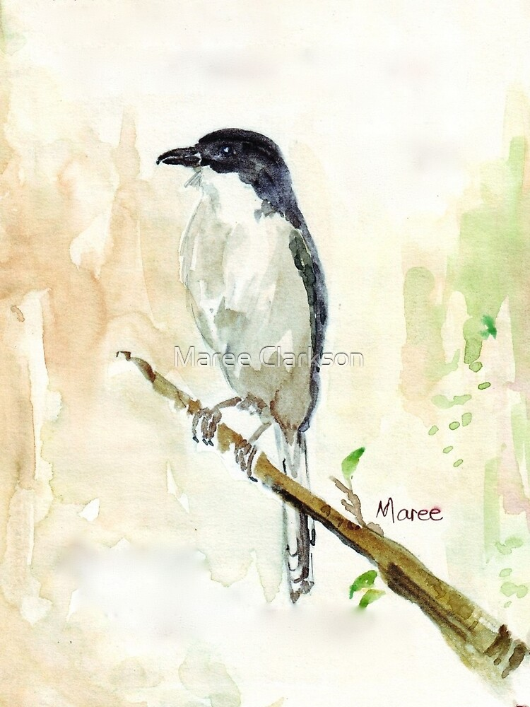 (Lanius collaris) Fiscal Shrike by Maree Clarkson