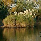 Riddells Creek Lake by MIchelle Thompson