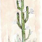 Kaktus - Cereus jamacaru von Maree Clarkson