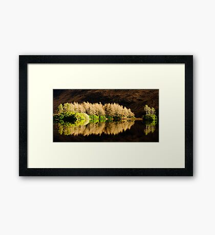 Winter Pines Framed Print